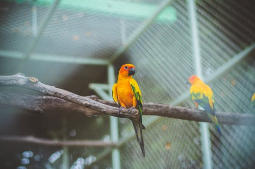 Yellow and Orange Bird on a Wooden Perch
