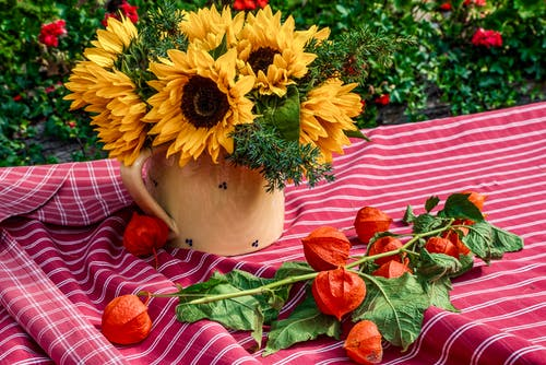 Immagine gratuita di autunno, cadere, cestino, cibo