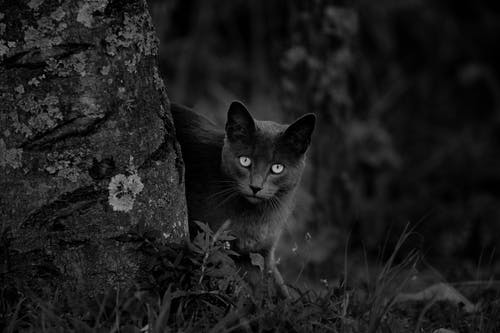 Black and white of attentive cat looking at camera while standing on grass near tree trunk in forest in summer in nature