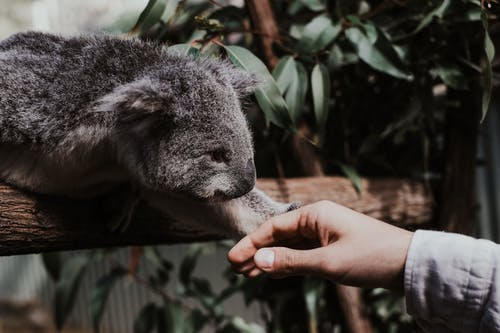 Photos gratuites de animal, arbre, bois, contact