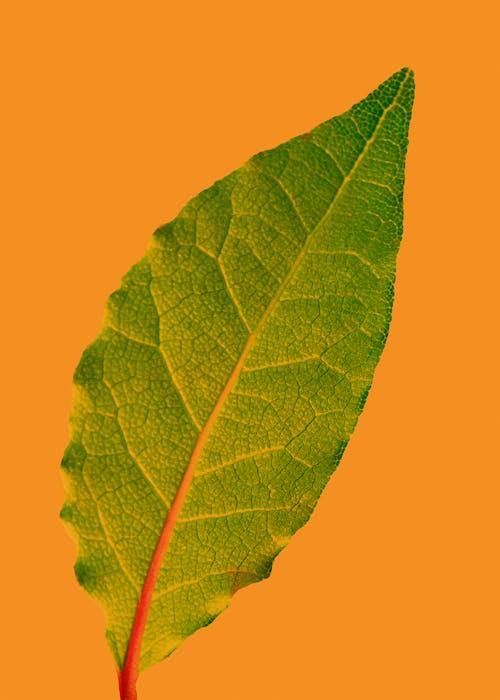 Green Leaf With Orange Background