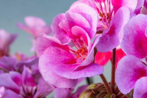 Immagine gratuita di bellezza, bellezza naturale, brigworkz, colore autunnale