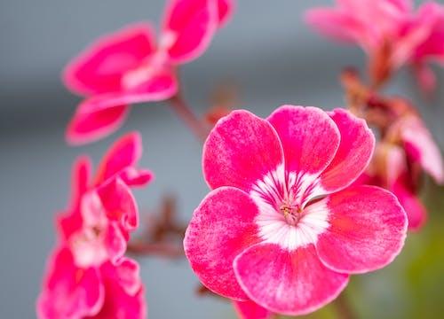 Immagine gratuita di bellezza, bellezza naturale, bianco, bokeh