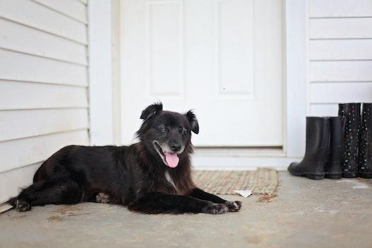 Free stock photo of animal, house, dog, pet