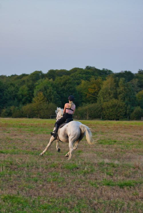 Back view of unrecognizable female equestrian in helmet riding graceful gray horse on grassy meadow near lush green forest