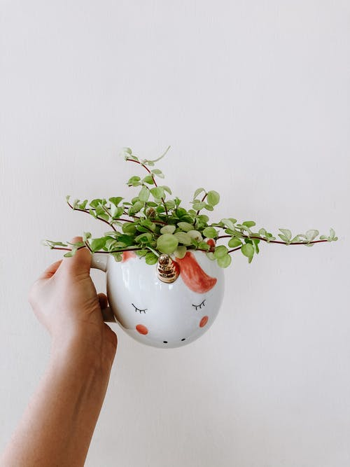 Person Holding White and Red Floral Ceramic Vase With Green Plant