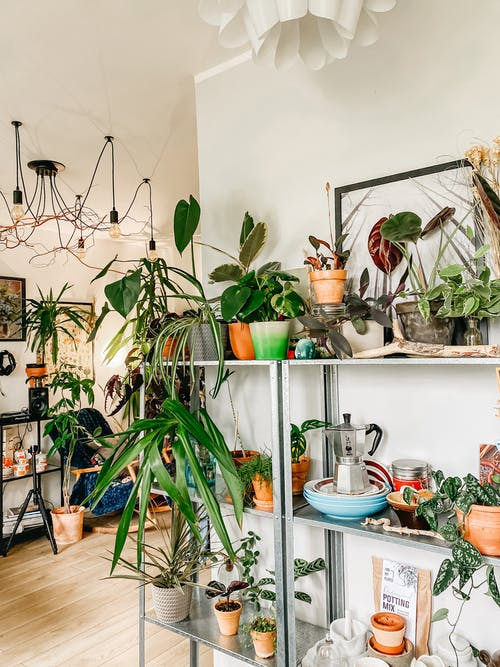 Interior of modern apartment with collection of potted houseplants