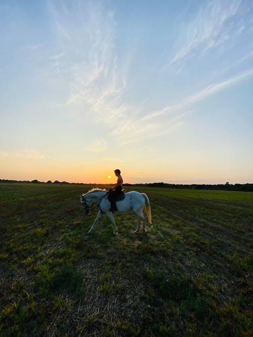 Side view of unrecognizable female equestrian riding white horse on green meadow against sundown sky in countryside