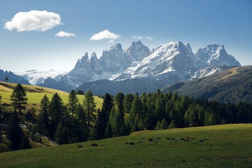 Gratis lagerfoto af gletsjer, græsser, sne, sø