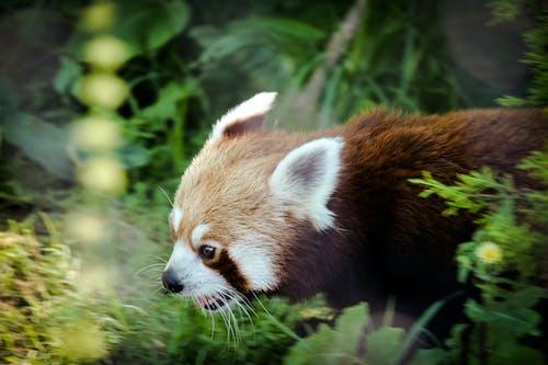 คลังภาพถ่ายฟรี ของ ธรรมชาติ, น่ารัก, ป่า, รูปสำหรับวันนี้