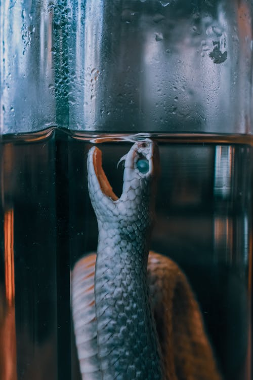 Embalmed scary harmful snake in glass bottle