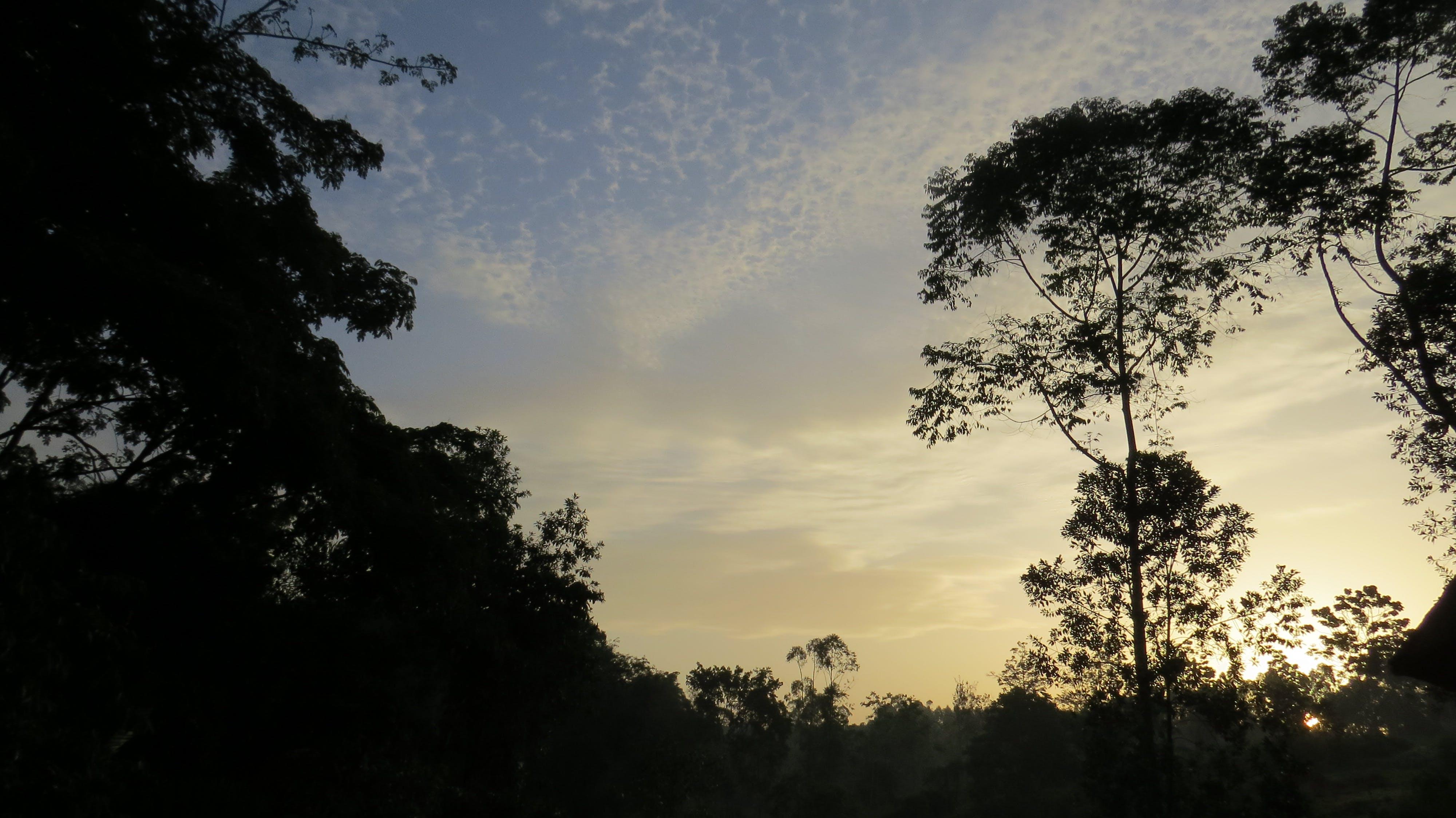 Free stock photo of africa, kibale, kibale forest, sunrise