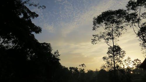 乌干达, 基巴莱, 基巴莱森林, 日出 的 免费素材照片