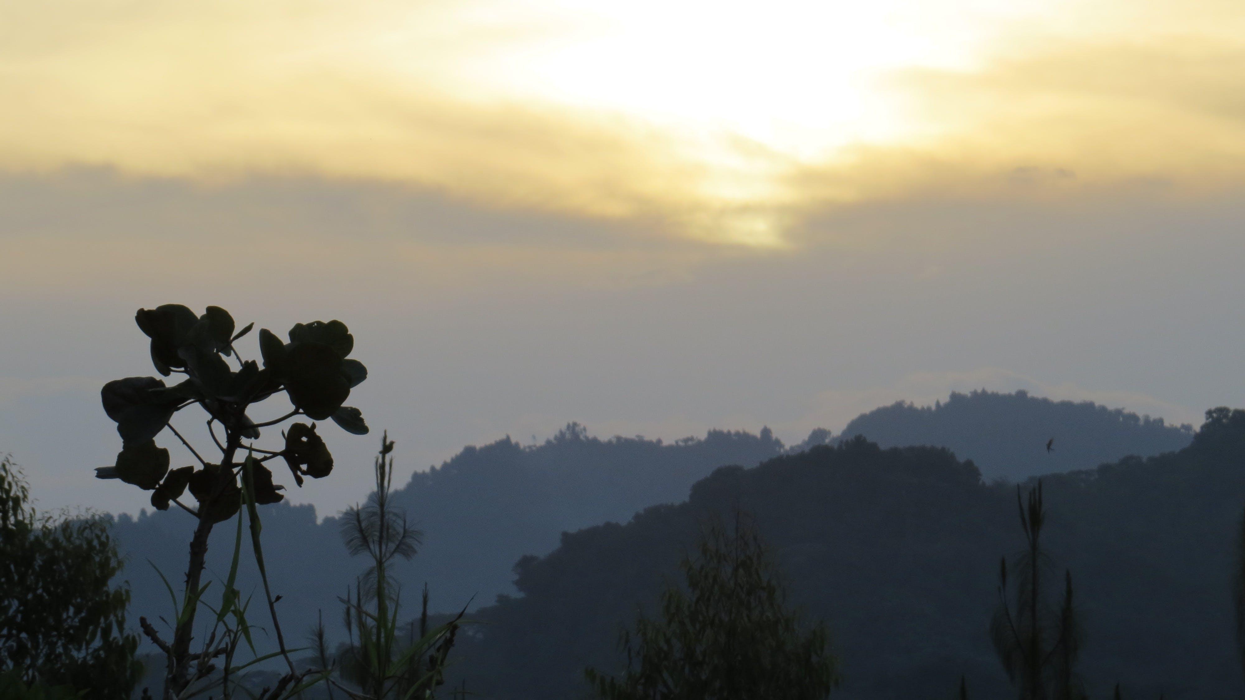 Δωρεάν στοκ φωτογραφιών με bwindi αδιαπέραστο, rushaga, Αφρική, δύση του ηλίου