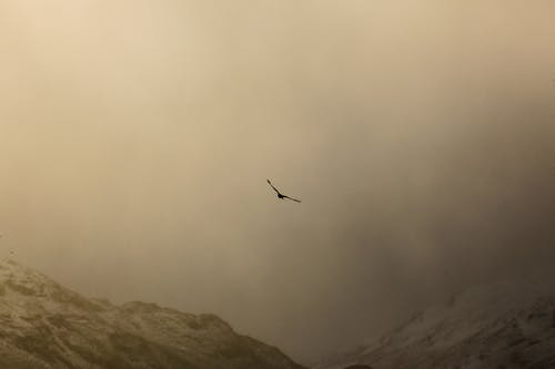 Bird flying over mountains in fog