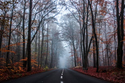 Asphalt road in autumn misty forest