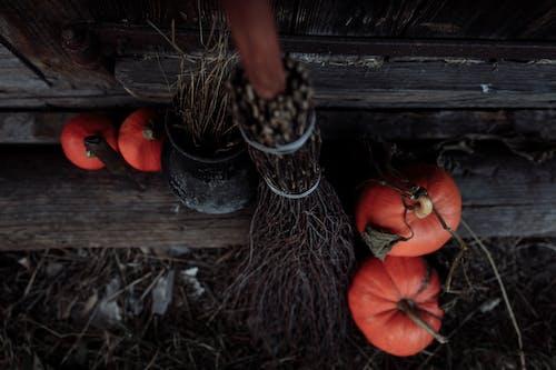Ingyenes stockfotó csokit vagy csalunk, fa, fából készült témában