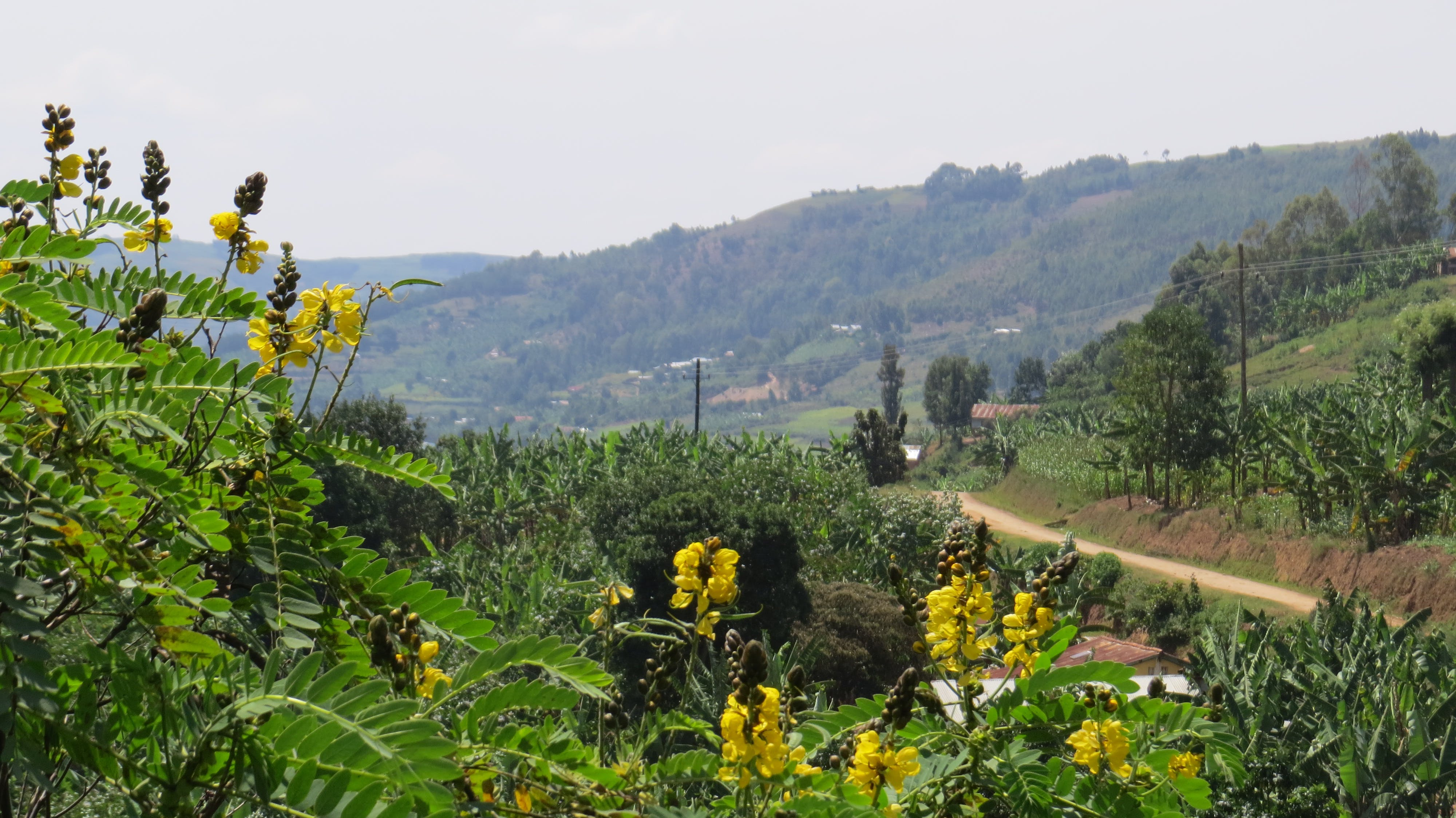 Δωρεάν στοκ φωτογραφιών με Αφρική, ουγκάντα