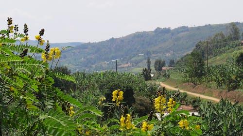 乌干达, 非洲 的 免费素材照片
