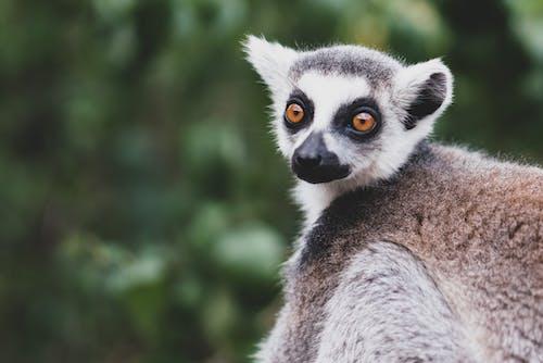 คลังภาพถ่ายฟรี ของ กลางแจ้ง, การถ่ายภาพสัตว์ป่า, การมอง, ขน