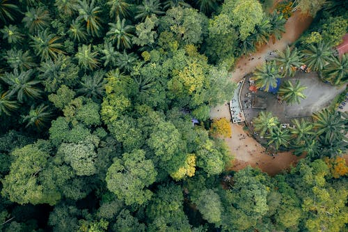 Lush tropical trees of forest growing along narrow path
