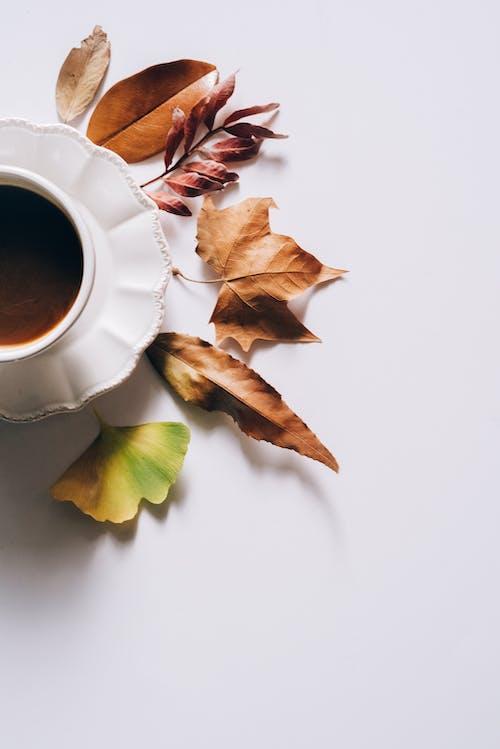 Immagine gratuita di alba, attraente, autunno, bevanda