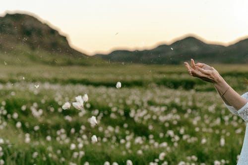 건초지, 경치, 꽃, 녹색의 무료 스톡 사진