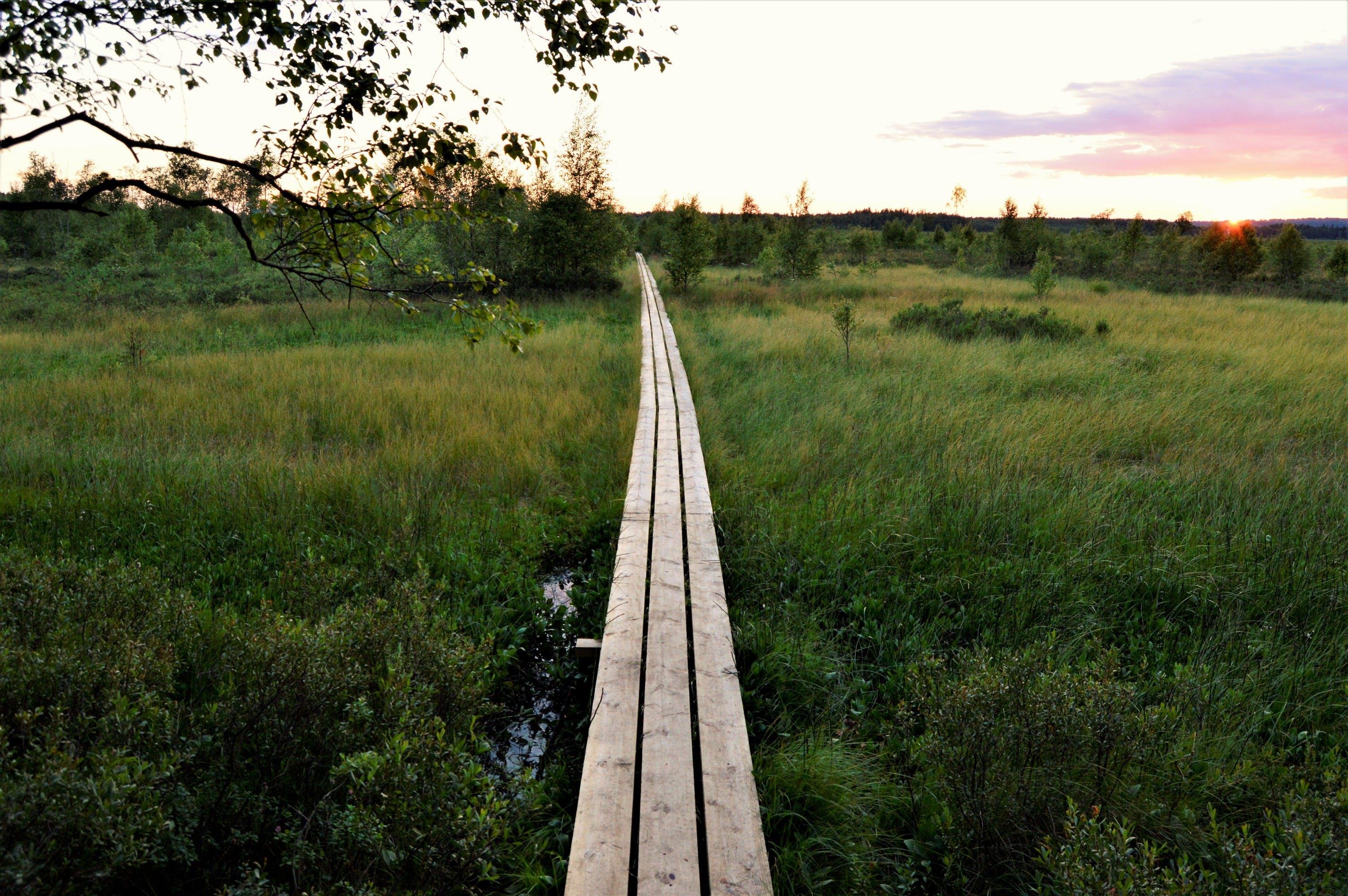 forest, grass, national park