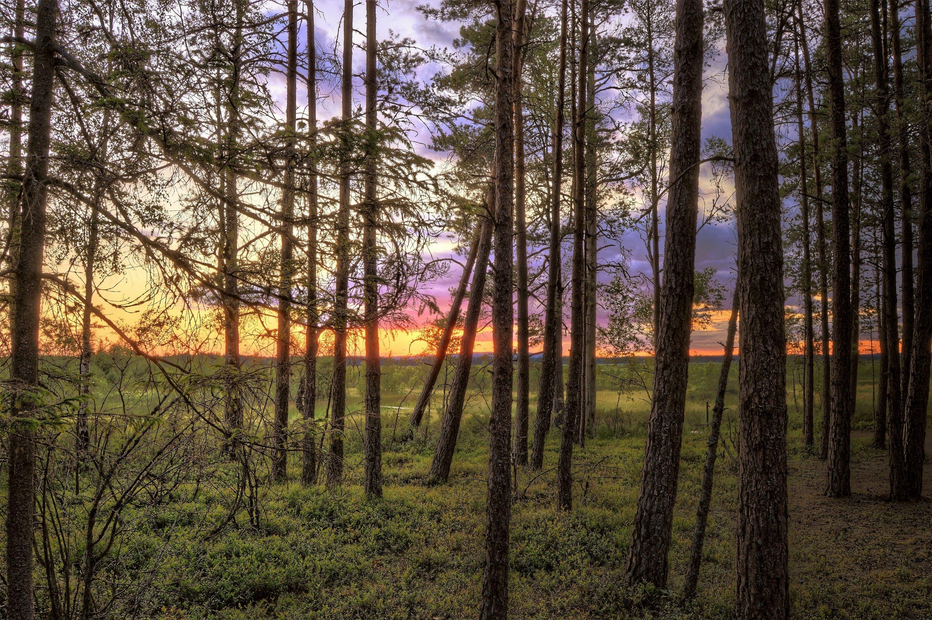 Tall Trees Near Green Grasses