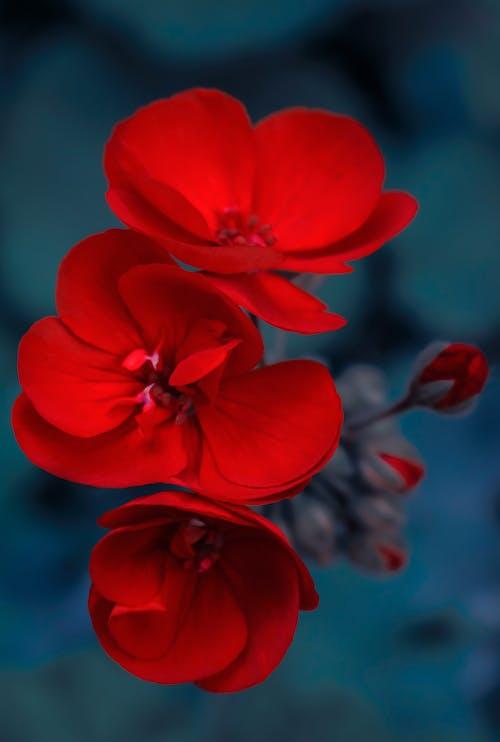 Beautiful Red Flowers in Bloom