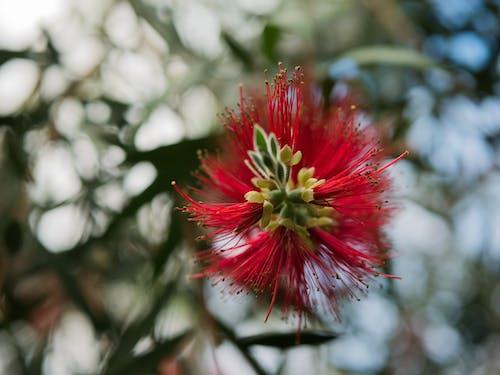 꽃, 녹색, 모양의, 바늘의 무료 스톡 사진