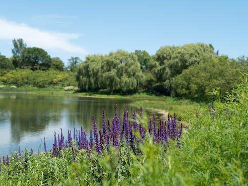 나무, 녹색, 물, 반사의 무료 스톡 사진