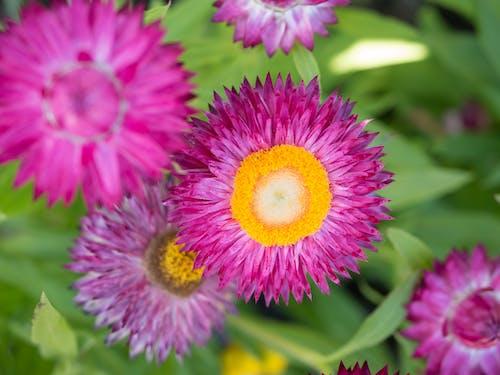 꽃, 날카로운, 노란색, 녹색의 무료 스톡 사진