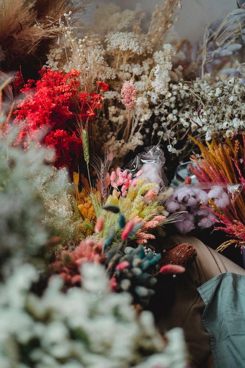 Assortment of flowers in floral shop