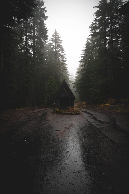 Wooden cabin on road in woods