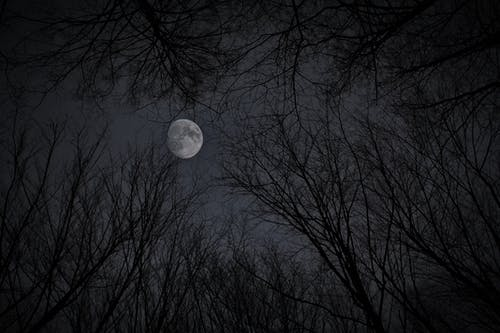 White moon in gray sky with trees