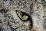 animal, fur, eye