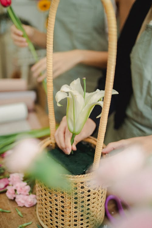 Crop women planting flower in basket