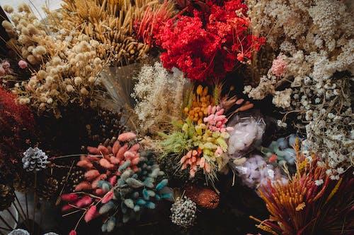 Foto profissional grátis de arranjo, baseado, botânica, botão