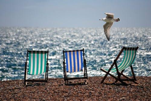 Kostnadsfri bild av fiskmås, hav, havet, sand