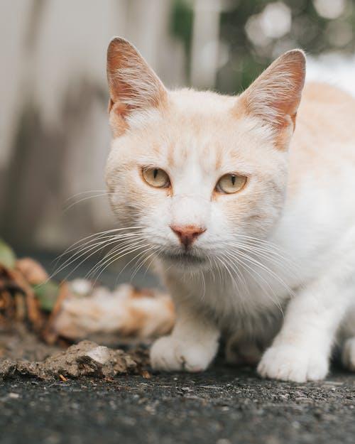 White and Orange Cat on Black Floor