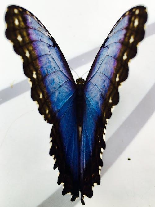 Бесплатное стоковое фото с бабочка, голубой, дубай