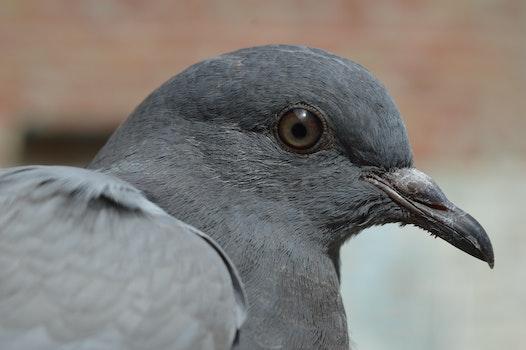 Grey Bird during Daytime