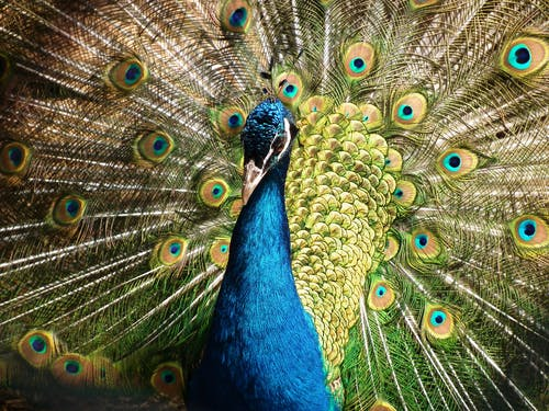 Kostenloses Stock Foto zu beat rad, bunt, farbenfroh, gefieder
