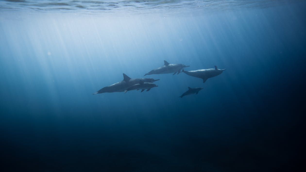 3 Dauphins Dans La Mer