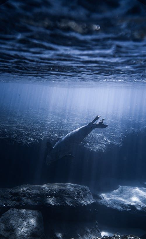 Aquatic Animal Swimming Under Water Near Rock