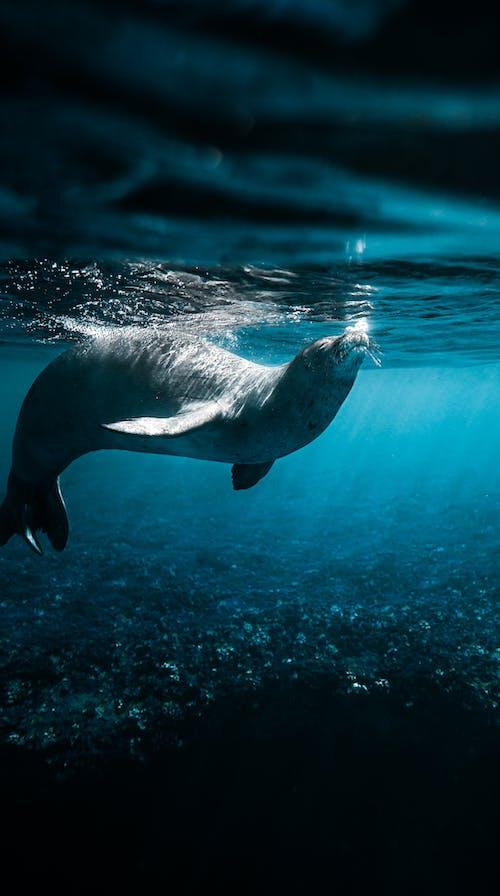 Black Seal in Water