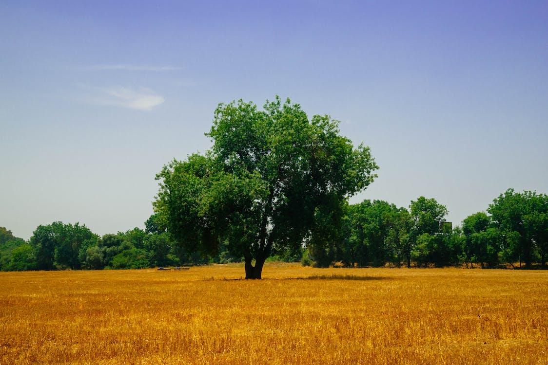 Green Trees on Field