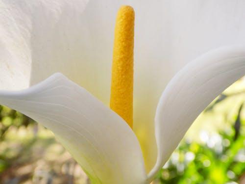 Základová fotografie zdarma na téma krásné květiny, kytka, lilly