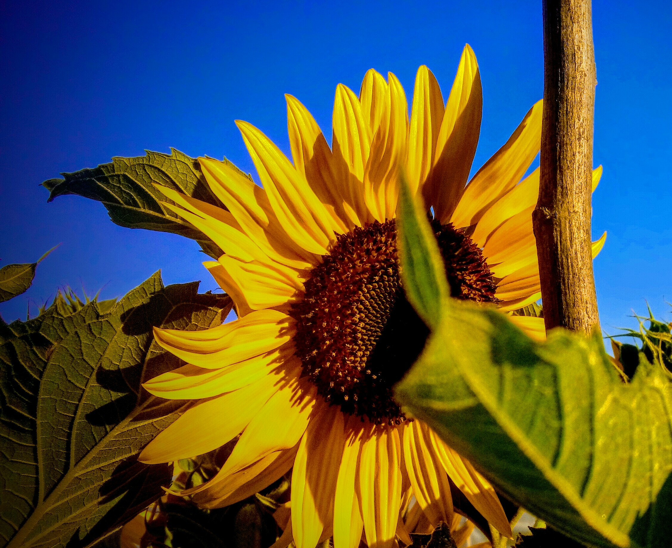 pexels photo 541137.jpeg?cs=srgb&dl=alam bunga matahari bunga bunga indah 541137